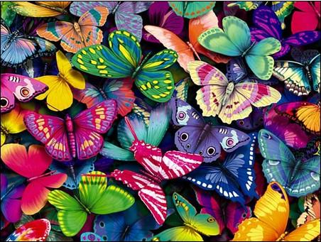 Butterflies-A-Million