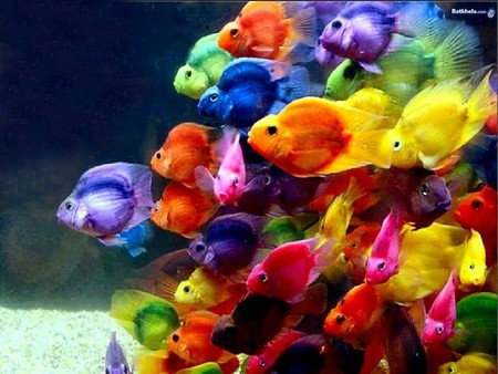 Every Fish Of The Rainbow