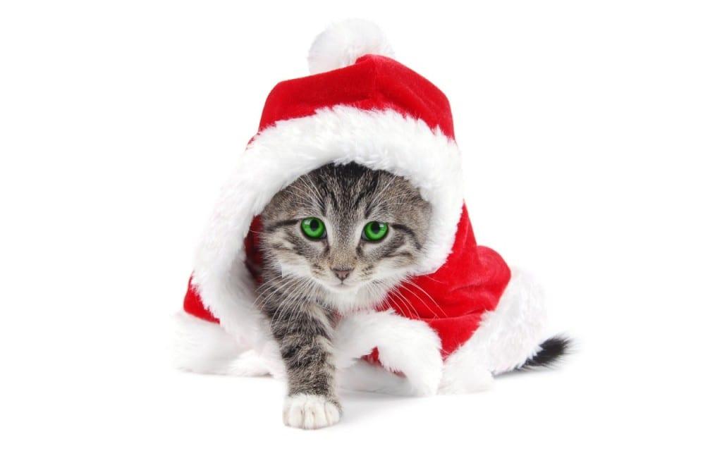 Santa is a cat