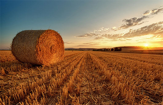 Bale Of Straw during sunset by Philipp Klinger Photography