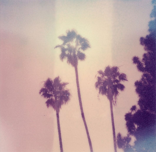 Palm-Sun Day by tobysx70