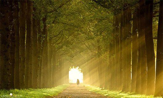 zonnestaaltjes by Lars van de Goor