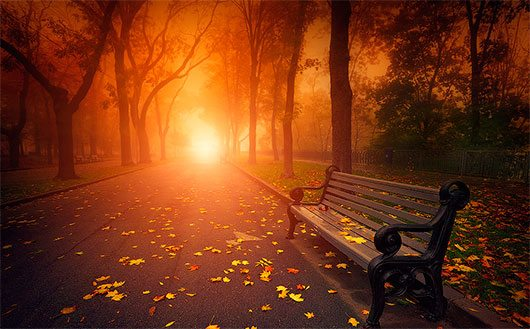 bench in foggy autumn park by Sergiy Trofimov