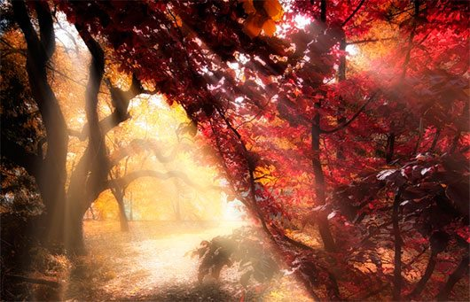 Let it shine by Ildiko Neer