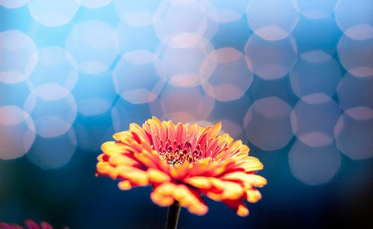 Sparkling Daisy