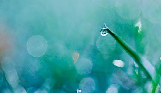 frozen dew