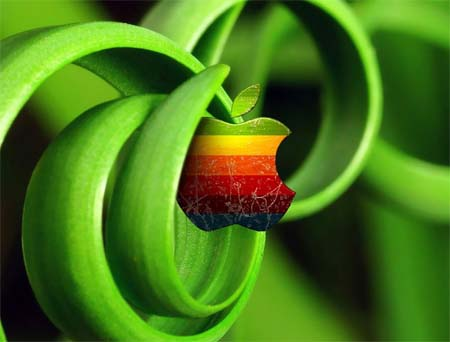 Plant Apple