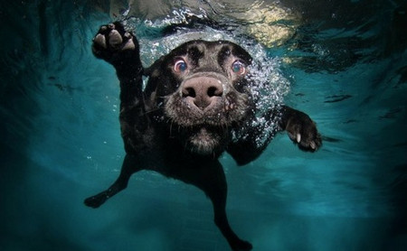 Diving Dogs Photography