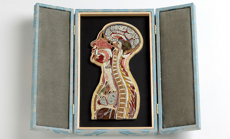 Anatomical Cross-Sections Made with Quilled Paper by Lisa Nilsson