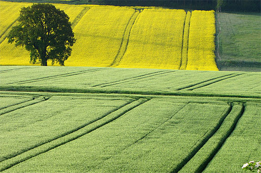 Shades of green and yellow by RainerSchuetz