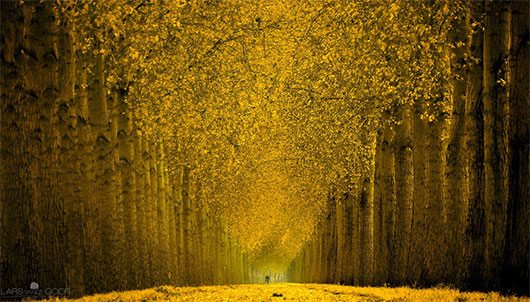 Cycle in Gold scnd by Lars van de Goor