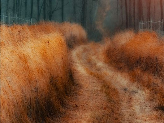 Gold of grass by Ildiko Neer