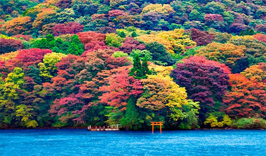 Ashi Lake, Japan by Ricardo Bevilaqua