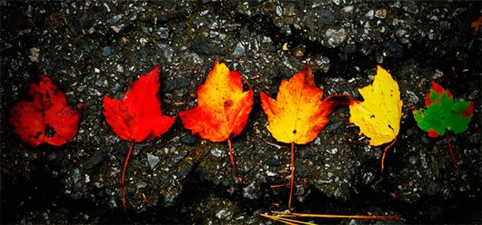 The Colors of Fall by xfallxoutxgirlsx