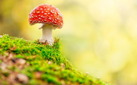 Fly Agaric in forest by Stefan Holm
