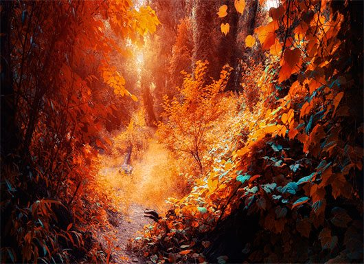 Love changes everything... by Ildiko Neer