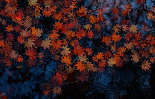 Fall has fallen by Tashi Delek