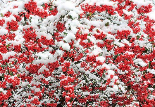 Winter by Bahman Farzad