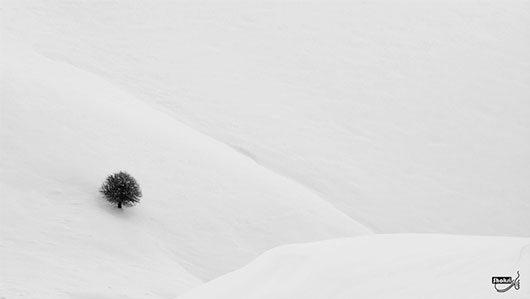 None by Ali Shokri
