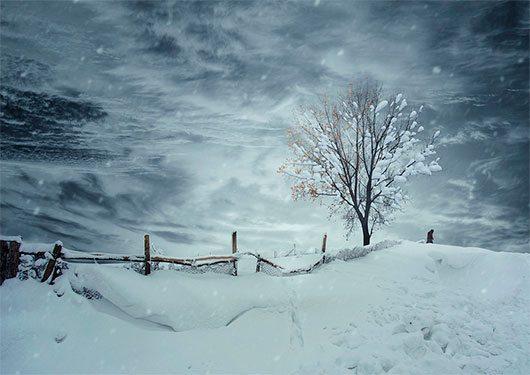 Winter stranger by Caras Ionut